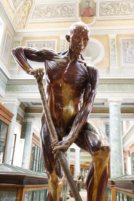 musée-anatomie-Montpellier-écorché
