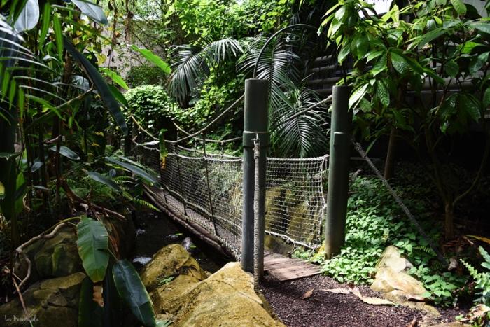 pont-décor-zoo-lunaret-montpellier-serre