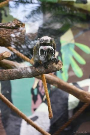 tamarin-empereur-singe-Montpellier-zoo
