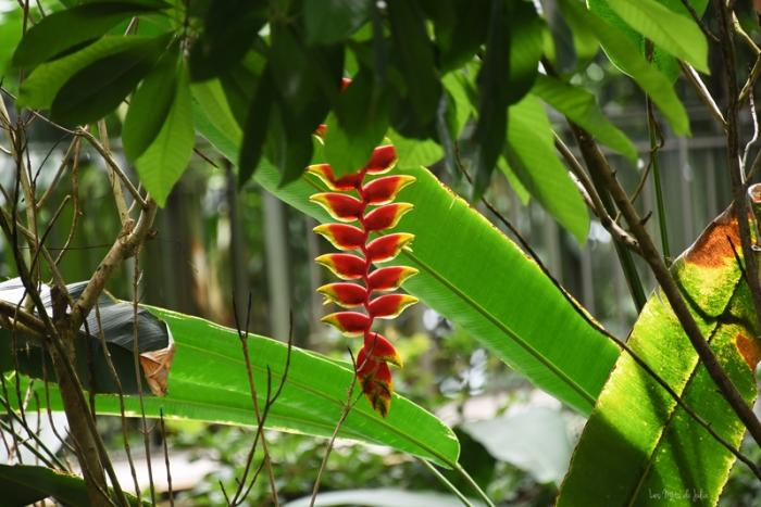 fleur-serre-amazonienne-zoo-montpellier