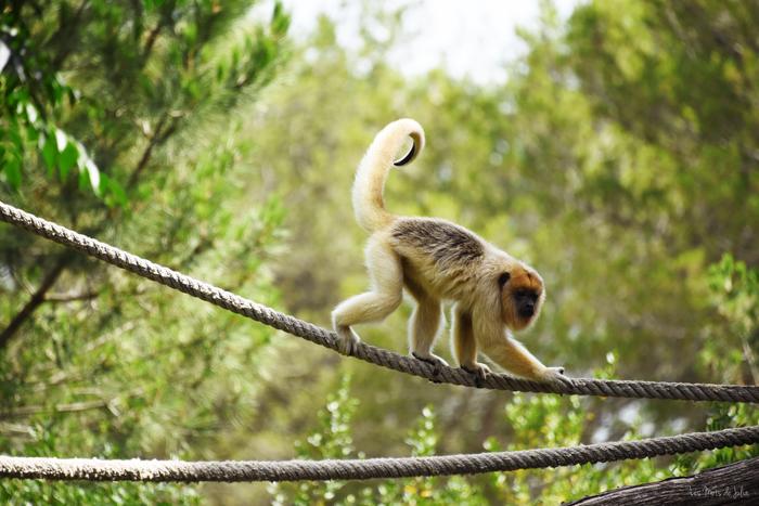 singe-zoo-lunaret-Montpellier-serre-amazonienne
